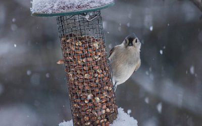 Is it Wrong to Feed the Birds?